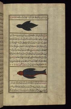 Two Strange Fish from the Vaynah (Vinah?) Seas