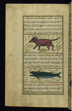 A Water-dog and a Swordfish