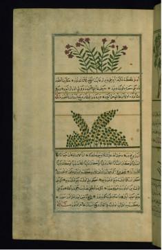 A Plant Called Azarbun and a Plant Called Adkhar