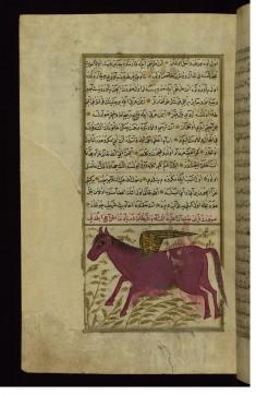 King Solomon's Horse