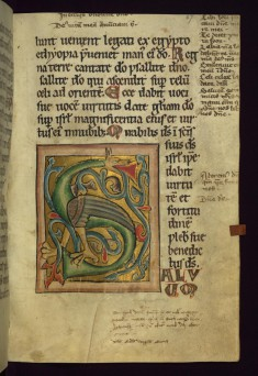 "Initial ""S"" with dragon"