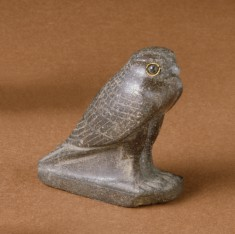 Hawk; Falcon
