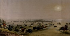 "A ""Surround"" of Buffalo by Indians"