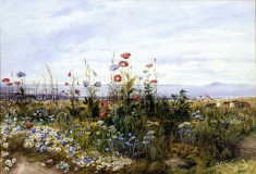 Wildflowers with a View of Dublin Bay from Kingstown