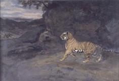 Tiger Watching an Elephant