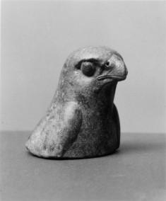 Head of a Hawk