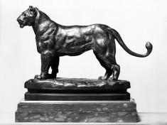 Lioness of Algeria