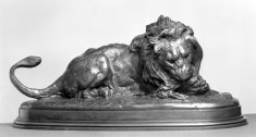 Lion Devouring a Doe