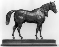 Half-Blood Horse