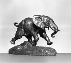 African Elephant Running