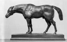 Half-Blood Horse, with Head Down