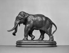 Elephant of Asia