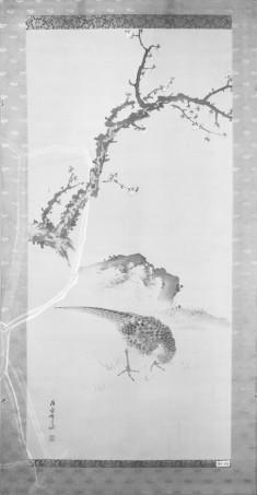 Pheasant in Landscape