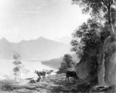 Cattle by a Mountain Lake