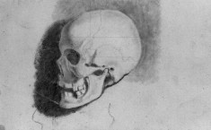 Academic Study of a Skull