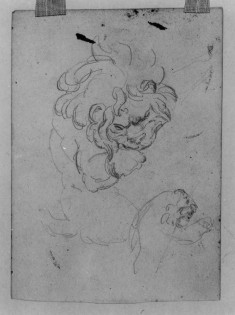 Sketch of a Lion After Rubens
