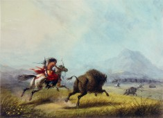 Buffalo Chase by a Female