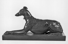 Tom, the Algerian Greyhound