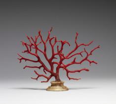 Corallium rubrum (Mediterranean Red Coral Tree)