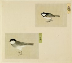 Leaf from Album Depicting Small Birds