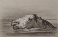 Head of a Swimming Horse
