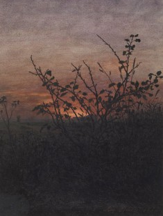 Sunset, Woodland Scene