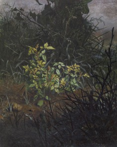 Glimpse in a Thicket