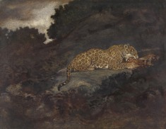 Leopard Eating