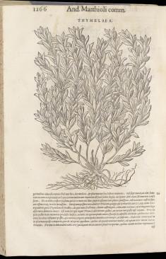 Compendium de plantis omnibus (2 vols.)