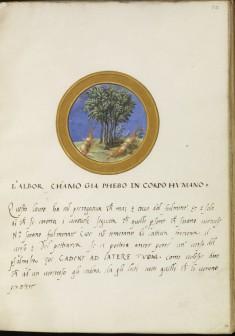 Leaf from Emblem Book