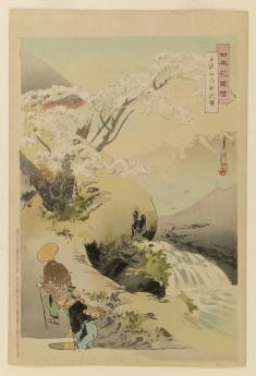 Travelers pass sacred cherry tree at Mt. Togakushi