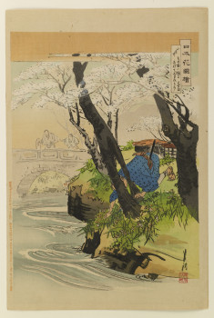 Cherry trees on a river bank