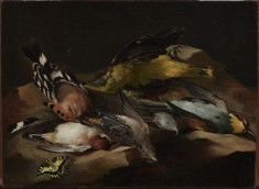 Still Life of Birds and a Butterfly