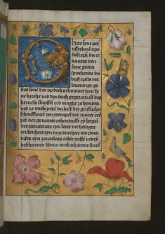 "Leaf from Aussem Hours: Prayer to Saint Peter, Foliate Initial ""O"" with Marginal Flowers and Insects"